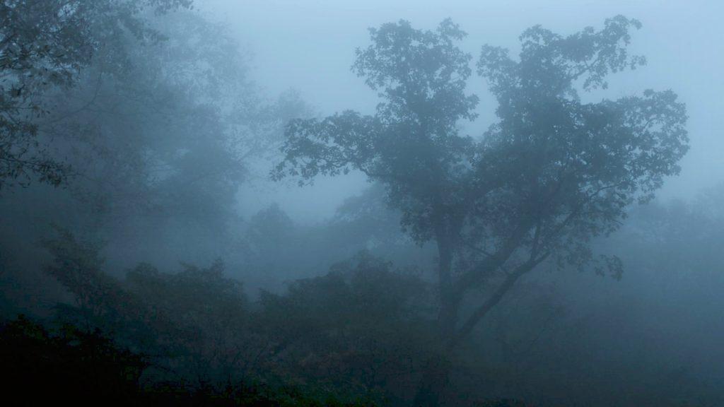 映画 「アルビノの木」