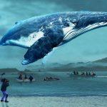 映画「おクジラさま ふたつの正義の物語」(A WHALE OF A TALE)