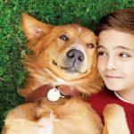 映画『僕のワンダフル・ライフ』(A DOG'S PURPOSE)