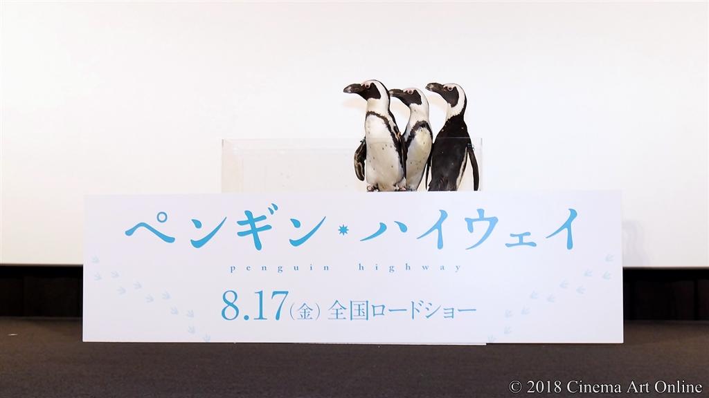 【写真】映画『ペンギン・ハイウェイ』完成披露舞台挨拶 (ケープペンギン)