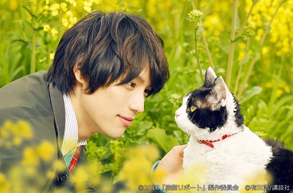 【画像】映画『旅猫リポート』