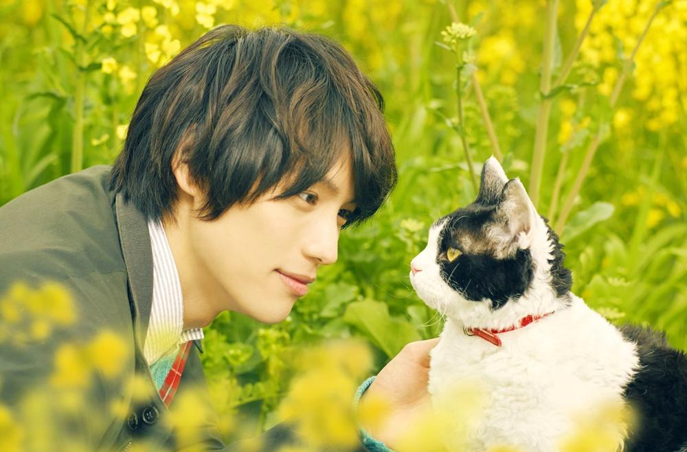 【画像】映画『旅猫リポート』メインカット
