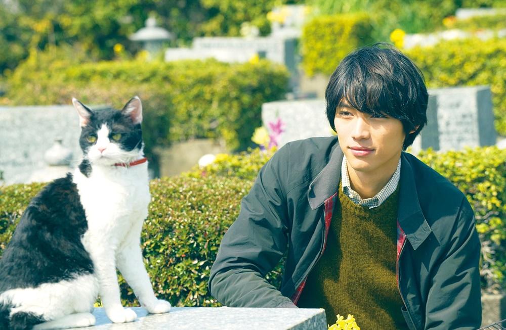【画像】映画『旅猫リポート』場面カット6