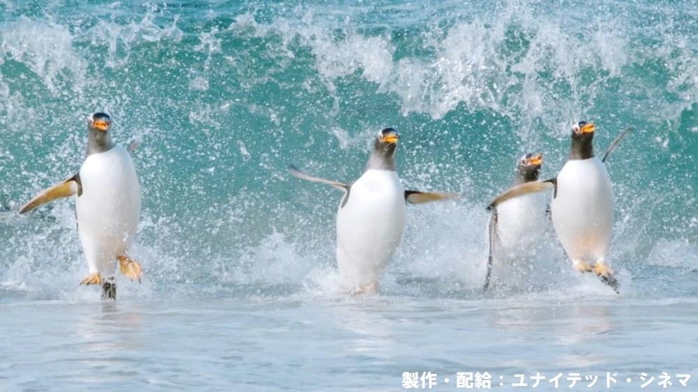 【画像】映画『驚き!海の生きもの超伝説 劇場版ダーウィンが来た!』メインカット