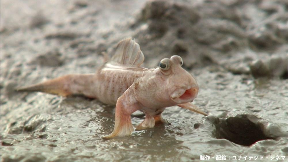 【画像】映画『驚き!海の生きもの超伝説 劇場版ダーウィンが来た!』場面カット